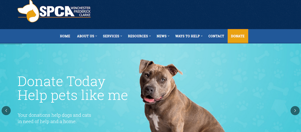 winchester spca home page