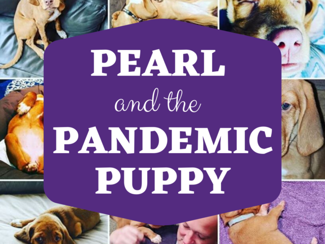 Pearl And The Pandemic Puppy